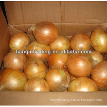 China yellow onion