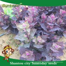 Suntoday Азиатский домашний сад каталог питания овощных гибридные фруктов и овощей F1 органические семена прунелла asisatica накаи(81001)