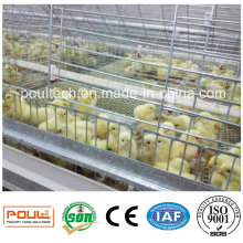Pullet Chick Cage and Incubator for Poultry Farms