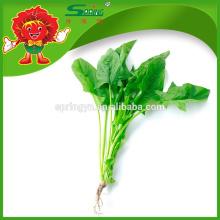 IQF espinacas orgánicas de hoja entera