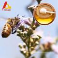 Raw Chaste Bee Honey Benefits