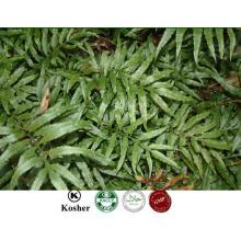 Fabricante Fornecimento 100% Natural Drynaria Rhizome PE