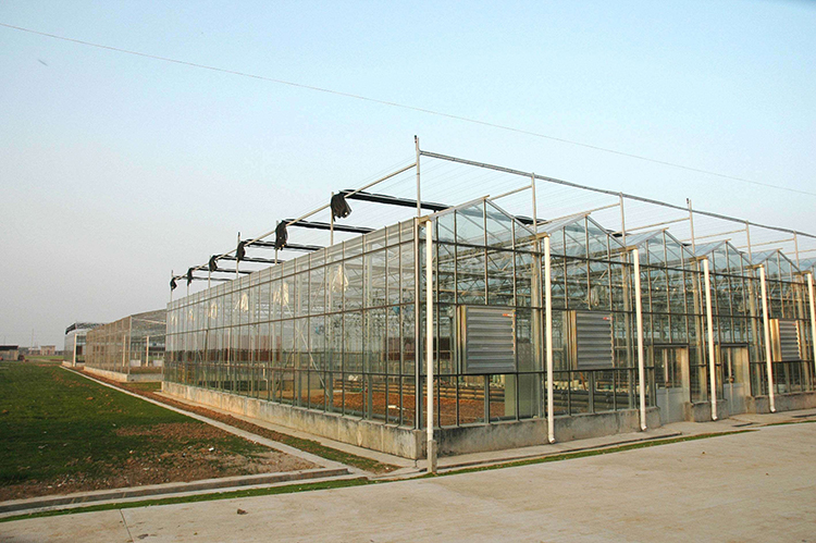 Glass Greenhouse Gardening