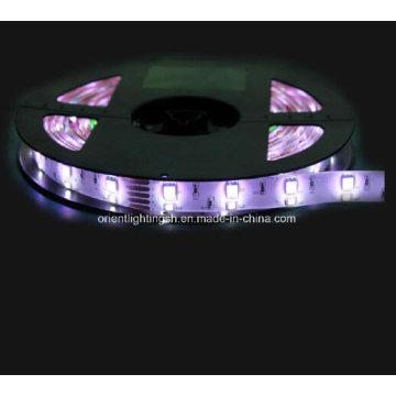SMD 5060 + 1210 RGB + W Faixa Flexível-120 LEDs / M LED Light