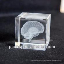 3D лазерный Кристалл модель мозга как сувенир или подарки