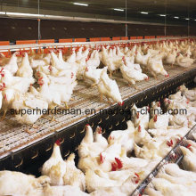 Automatic Poultry Equipment for Breeder