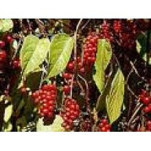 Factory Supply 100% Natural Schizandra Berry Extract