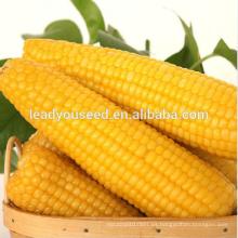 NCO012 Kele Guangzhou mejores semillas de maíz para la venta