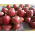 Organik Sweet Juicy Fresh Apples Red For Export