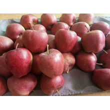 Organic Sweet Juicy Fresh Red Apples For Export