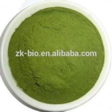 Polvo orgánico de hierba de cebada deshidratada