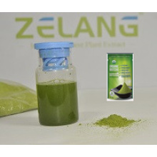 Manufacturer Ceremonial Grade Matcha Tea Private Label