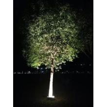 Edificio antiguo Proyecto al aire libre Azulejo de luz de árbol