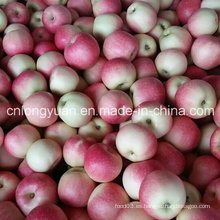 138-198 # Red Gala Apple con caja de 20 kg