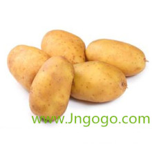 New Crop Export Good Quality Chinese Fresh Potato