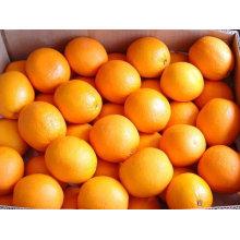 hight quality navel orange