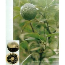 Naringin, Citrus Bioflavonoids, Synephrine & Citrus Aurantium Extract