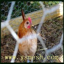 Galvanized/PVC chicken wire mesh