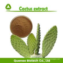 Polvo de extracto de Cactus Caralluma Fimbriata Pérdida de peso 10: 1
