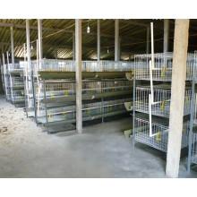Sistema de gaiola de camada de frango / gaiola de galinha