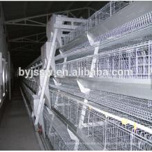 Слой Эфиопии Птицеферму Птицы Оборудование Для Продажи