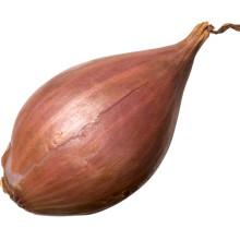 2021 New Crop Chinese High Quality Cheap Fresh Samll Red Onion Shallot