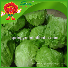 no rotten Grenn leaf lettuce priemium goods with lowest price