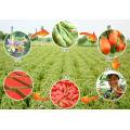 Lowpesticide Goji Berry (un peu de résidu de pesticide)