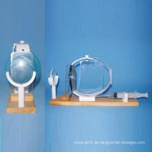 Menschliches Augen-Augeninnendruck-Modell für medizinische Lehre (R060109)