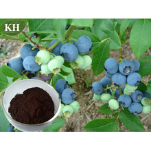 Bilberry Extract, Anthocyanidins Treat Circulation Disorders