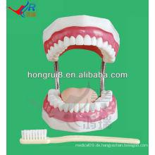 Zahnpflege Modell 28 Zähne Zahnpastik