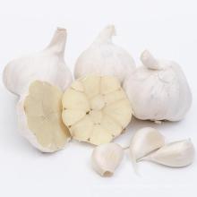 Wholesale 2021 New Fresh Garlic Supplier Normal Pure White Garlic