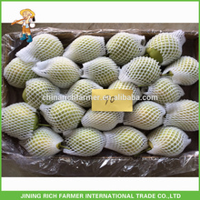 Super Food Fresh Shandong Pear