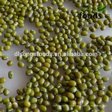 2013 Chinese Bulk Fresh Green Mung Bean For Sale