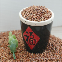 Red sorghum in low price with good quality