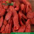 Certified Organic Goji Berry 2018 Crop from Qinghai
