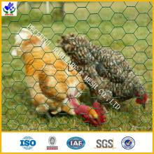 Куриный провод / шестигранная сетка (HPZS-1008)