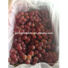 Vender uvas de Yunnan / uvas vermelhas frescas / melhores uvas vermelhas frescas