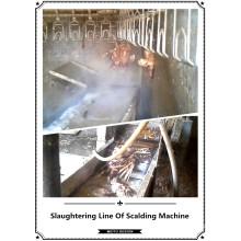 2015 Hot Sale Professional Chicken Scalding Machine