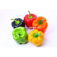 Pimiento dulce chino / pimienta colorida