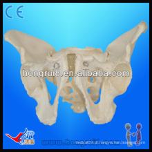 Modelos de esqueleto pélvico de tamanho natural, pelvis masculina para adultos