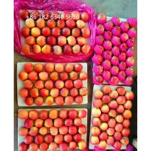 Pomme Fuji en sachet plastique Honey Fuji