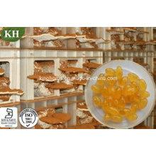 100% Natural Reishi Spore Oil Softgel (sem aditivos ou suportes)