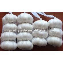 China cold stored garlic