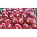 2016 Red Delicious Huaniu Apfel