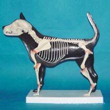Unterricht Verwendung Hund Skelett Tier Anatomie Modell (R190109)