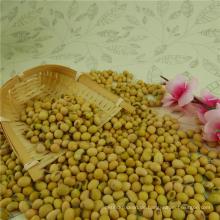 Sojabohnen mit bester Qualität auf heißen Verkauf Non-GMO