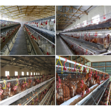 Coated or galvanized welded chicken cage