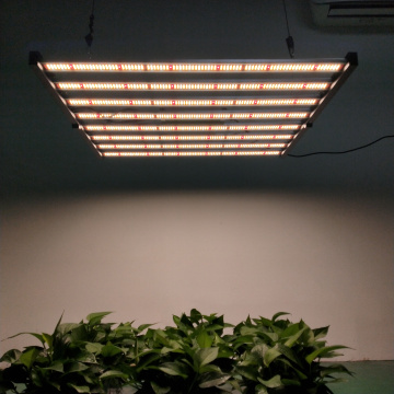 400/480/640 / 800w Full Spectrum LED Grow Lights zum Verkauf