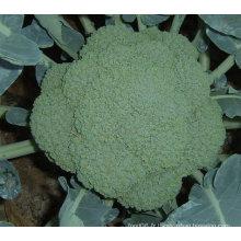 Brocoli vert